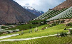 Accolade Wines buys Chile's Vina Anakena